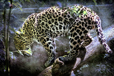 Photograph - Leopard On The Move by Belinda Greb