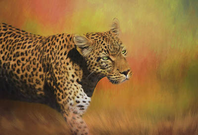 Photograph - Leopard On The Prowl by Kay Kochenderfer