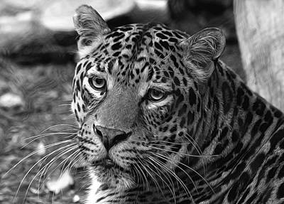 Photograph - Leopard Painted Black And White by Judy Vincent