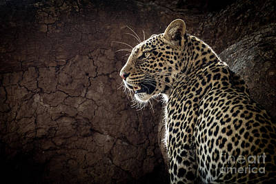 Photograph - Leopard by Patti Schulze