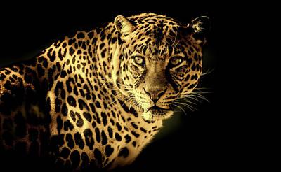 Photograph - Leopard by Pixabay