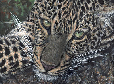 Leopard Portrait Art Print