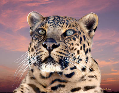 Photograph - Leopard Portrait Number 3 by Michele A Loftus
