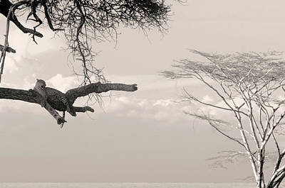 Photograph - Leopard Resting On A Tree by Stefano Buonamici