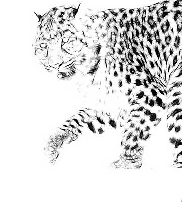 Photograph - Leopard Spots Black And White by Steve McKinzie