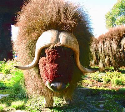 Photograph - Les Boeufs Musques The Muskoxen by Stephanie Moore