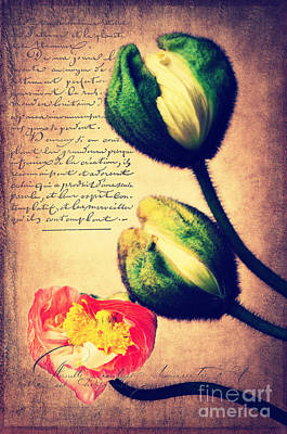 In Bloom Mixed Media - Les Temps De L'amour by Angela Doelling AD DESIGN Photo and PhotoArt