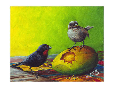 Painting - Lesser Antillean Bullfinches And Mango by Christopher Cox