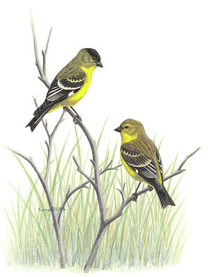 Goldfinch Drawing - Lesser Goldfinch Pair by Kalen Malueg