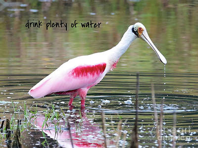Photograph - Lessons From Nature - Drink Plenty Of Water by Carol Groenen