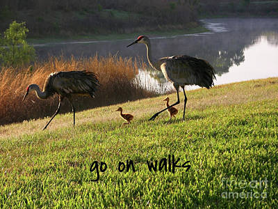Photograph - Lessons From Nature - Go On Walks by Carol Groenen