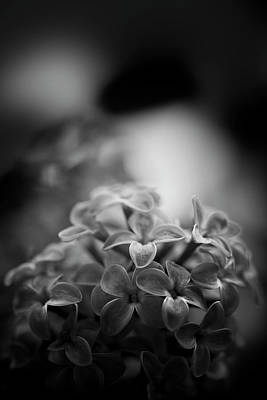 Photograph - Lessons Of The Lilac by Matthew Blum