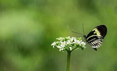 Photograph - Let It Rain by Jennifer