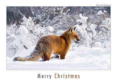 Christmas Card Art Photograph - Let It Snow 1 - Christmas Card Red Fox In The Snow by Roeselien Raimond