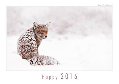 Christmas Card Art Photograph - Let It Snow 1 - New Years Card Red Fox In The Snow by Roeselien Raimond
