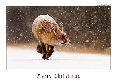 Christmas Card Art Photograph - Let It Snow 2 - Christmas Card Red Fox In The Snow by Roeselien Raimond