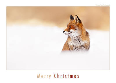 Christmas Card Art Photograph - Let It Snow 3 - Christmas Card Red Fox In The Snow by Roeselien Raimond