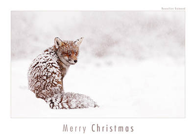 Christmas Card Art Photograph - Let It Snow 4 - Christmas Card Red Fox In The Snow by Roeselien Raimond