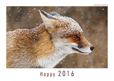 Christmas Card Art Photograph - Let It Snow 6 - New Years Card Red Fox In The Snow by Roeselien Raimond