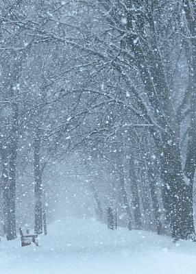 Photograph - Let It Snow by Lori Frisch