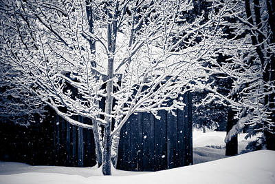 Winter Storm Photograph - Let It Snow by Maggie Terlecki