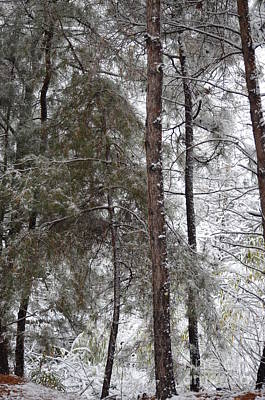 Photograph - Let It Snow by Maria Urso