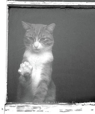 Photograph - Let Me Out by Roland Stanke
