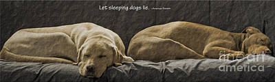 Lazy Dog Photograph - Let Sleeping Dogs Lie by Gwyn Newcombe