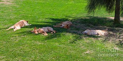Let Sleeping Dogs Lie Art Print by Louise Heusinkveld