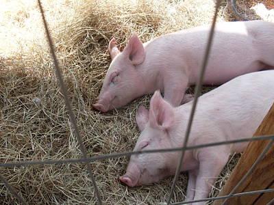 Let Sleeping Pigs Lie Art Print by Warren Thompson