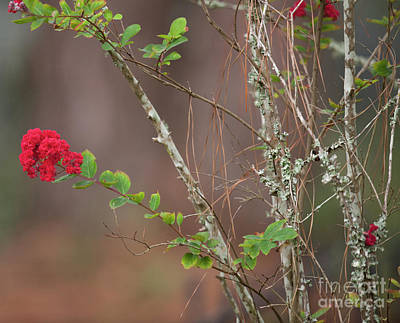 Photograph - Let The Blooming Begin by Dale Powell