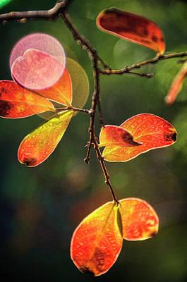 Photograph - Let The Morning Light Shine Through  by Saija Lehtonen