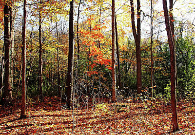 Photograph - Let The Sun Shine In by Debbie Oppermann