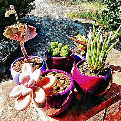 Photograph - Let The Sun Shine On Succulents by Dorothy Berry-Lound