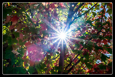 Photograph - Let The Sun Shine Through by Mick Anderson