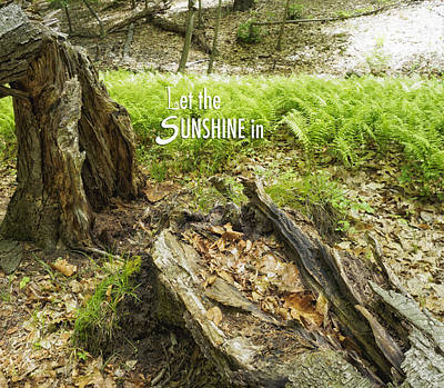 Photograph - Let The Sunshine In by Marianne Campolongo