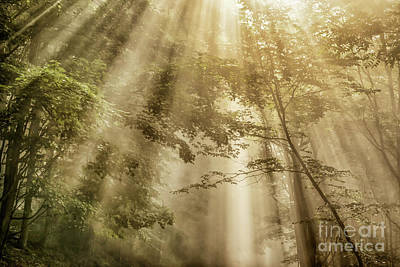 Photograph - Let Your Glory Shine by Thomas R Fletcher