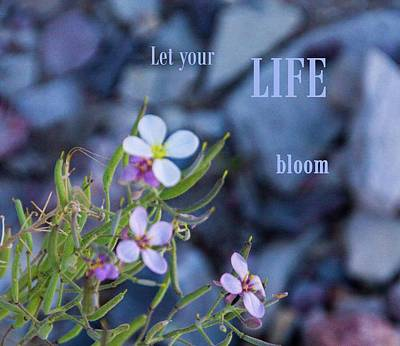 Photograph - Let Your Life Bloom by Nadine Berg
