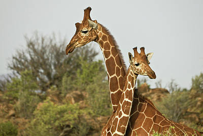 Photograph - Tall Friends by Michele Burgess