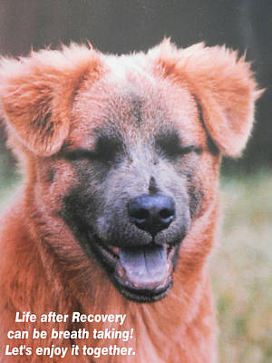 Photograph - Happy Dog Enjoying Life by Belinda Lee