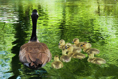 Baby Geese Wall Art - Photograph - Let's Go Kids by Donna Kennedy