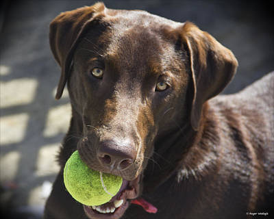 Dog Portrait Photograph - Lets Play Ball by Roger Wedegis