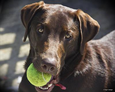Labrador Retriever Photograph - Lets Play Ball by Roger Wedegis