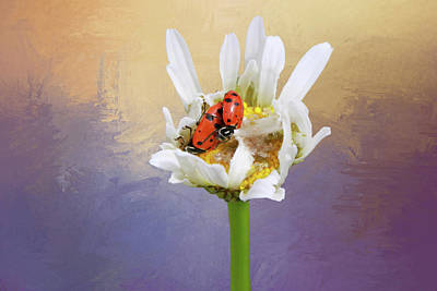 Ladybug Photograph - Lets Tango by Donna Kennedy