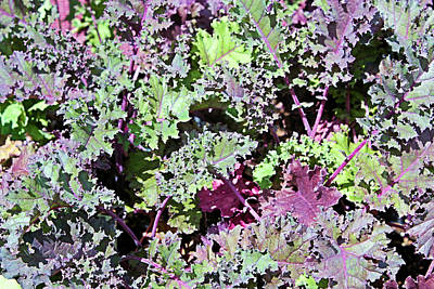 Photograph - Lettuce by Kristin Elmquist