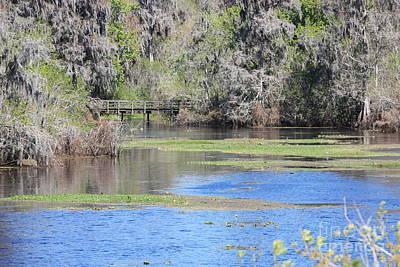 Florida Bridge Photograph - Lettuce Lake With Bridge by Carol Groenen