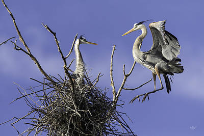 Heron Photograph - Levitation by Everet Regal