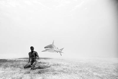 Shark Photograph - Levitation by One ocean One breath
