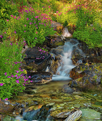 Photograph - Lewis Monkey Flowers And Cascade by Leland D Howard