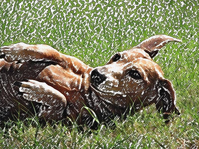 Dachshunds Doxie Digital Art - Lexie Girl by Lisa S Baker